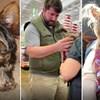 Pas im je nestao 2006. godine, 14 godina kasnije su saznali što mu se dogodilo