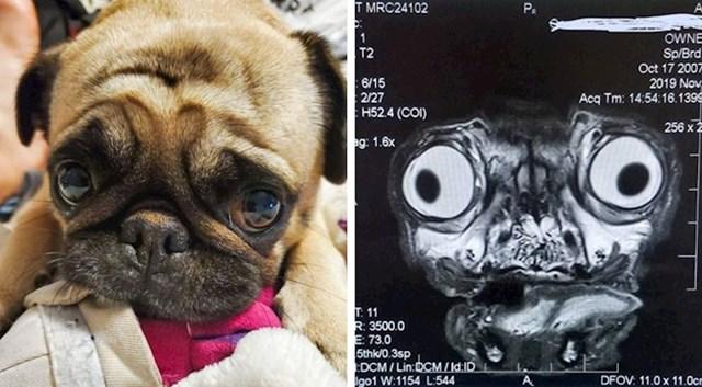 """""""Prijatelj je danas vodio psa na magnetsku rezonancu. Slika izgleda jako čudno."""""""