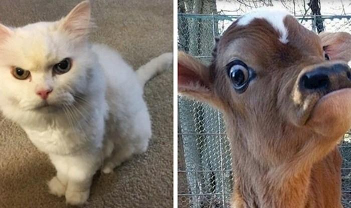 15 životinja koje su svojim izrazima lica nasmijale internet