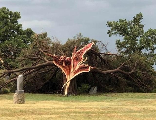 Ogromno drvo je nastradalo tijekom jake oluje.
