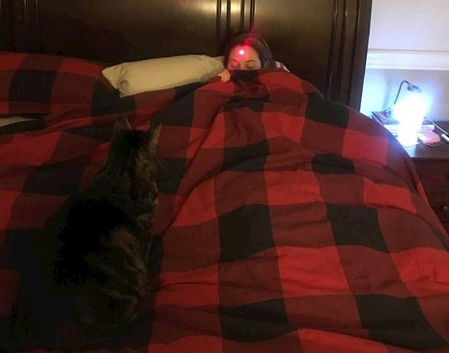 Kako probuditi nekoga pomoću mačke...
