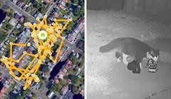 Ova mačka toliko voli krasti da je njen vlasnik napravio Facebook grupu za povrat stvari