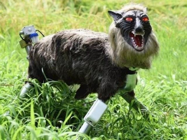 Ovaj robotski vuk čuva farmu japanske obitelji.