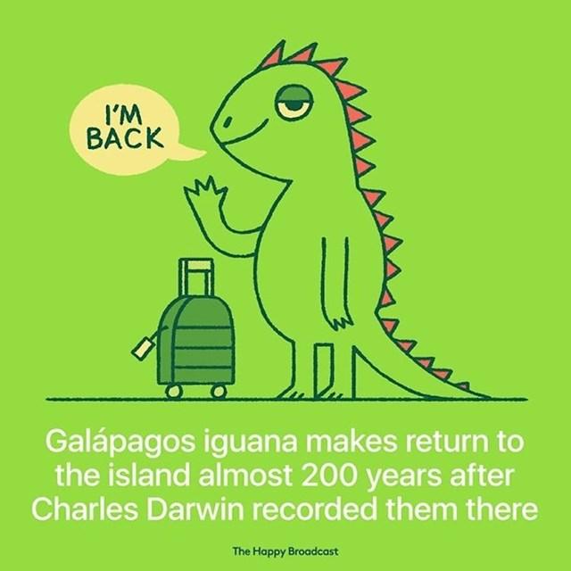 Galapagoška iguana vratila se na otočje 200 godina nakon što ih je Charles Darwin pisao o njima.