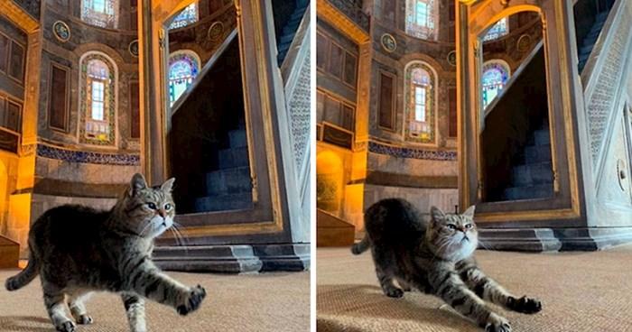 U Istanbulu postoji mačka koja živi u Aja Sofiji, pogledajte kako izgleda njen život