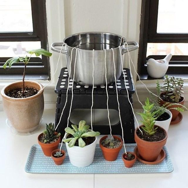 Kako zalijevati biljke tijekom godišnjeg odmora...