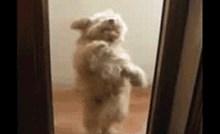 Kad je pas pokušavao ući u kuću, vlasnica je snimila urnebesnu scenu