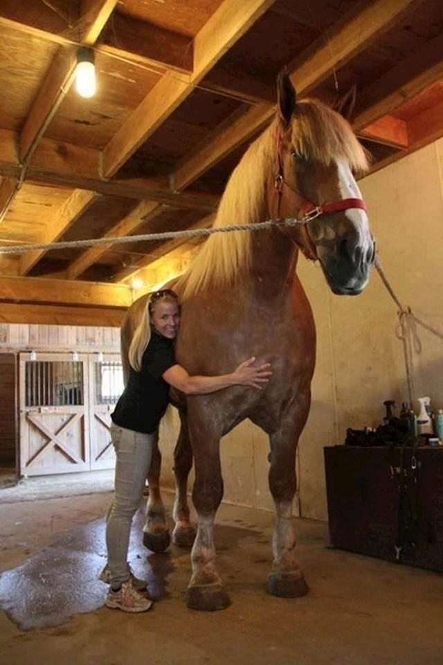 Jake, najviši konj na svijetu