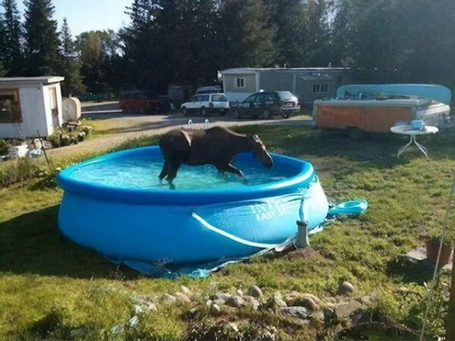 """""""Susjed nas je pitao smiju li koristiti naš bazen jer je njegov zauzet..."""""""