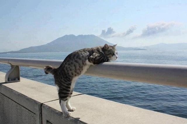 Mačka koja uživa u pogledu