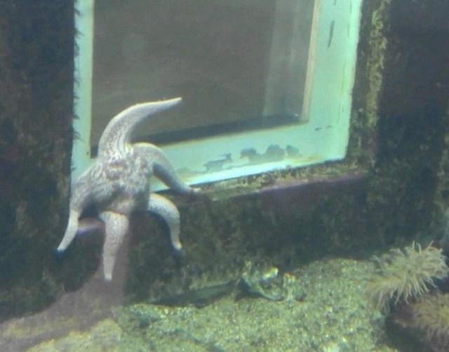Ništa neobično, samo morska zvijezda koja je malo sjela kako bi odmorila...