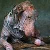 VIDEO Bolesni pas je odustao od života i samo ležao kraj ceste, a onda se dogodilo čudo