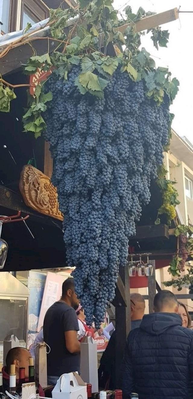 Jeste li ikad vidjeli veći grozd?