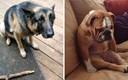 15 slatkih slika dobrih pasa koji su imali jako, jako loš dan