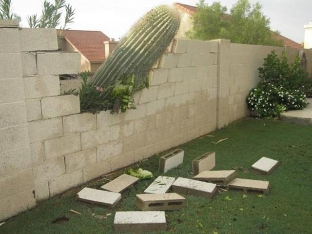 """""""Susjedov veliki kaktus je srušio našu ogradu."""""""
