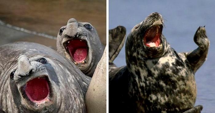 25 tuljana koji izgledaju kao da su čuli najsmješniji vic ikad