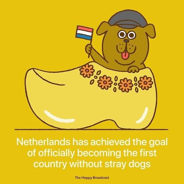 Nizozemska je službeno postala prva zemlja bez pasa lutalica.