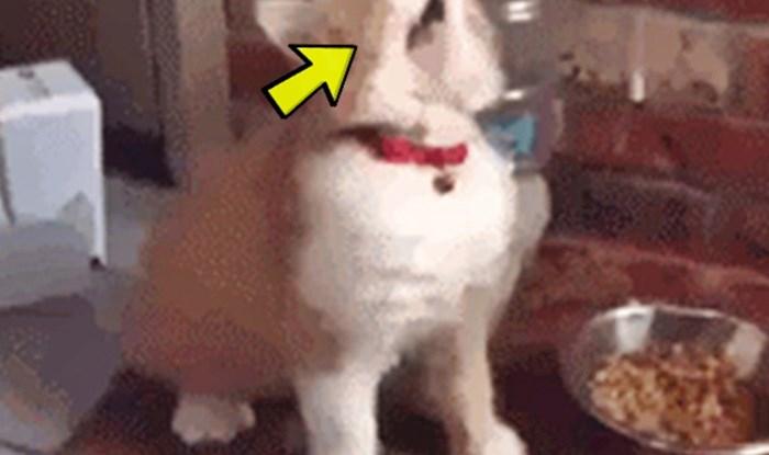 Vlasnica je snimila svoju mačku u najsmješnijem mogućem trenutku, pogledajte što je radila