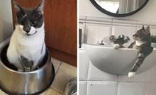 15 mačaka koje misle da su kraljice svemira