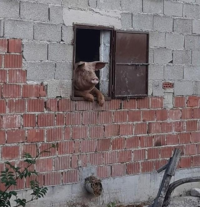 Pogledajte tko ga je gledao s prozora: