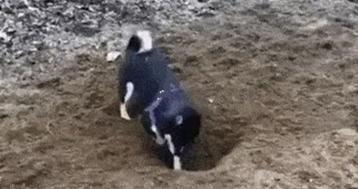 Pas je počeo divljački kopati rupu, a onda je uslijedilo nešto što je nasmijalo vlasnika