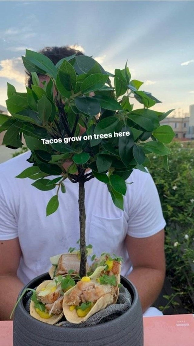 """""""Ovdje tacosi rastu na drveću."""""""