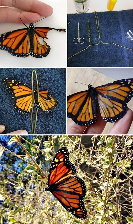 Leptiru je popravila krilo. Mogao je opet letjeti.
