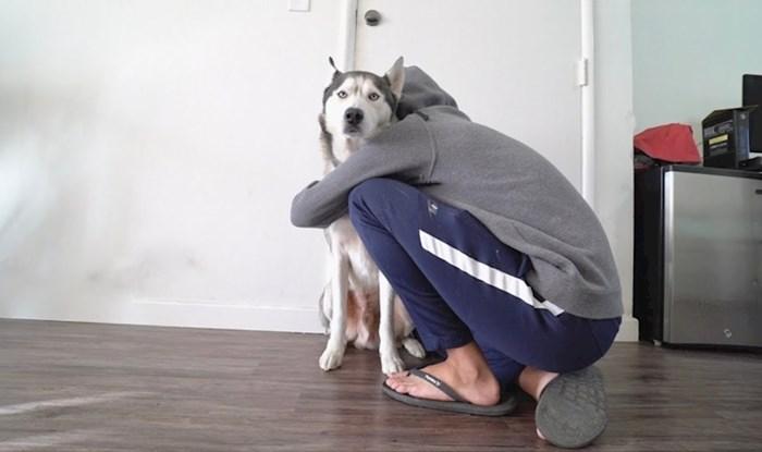 VIDEO Lik je provjerio što se dogodi kad svog psa predugo grlite, evo kako je haski reagirao