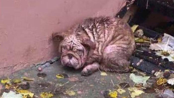 Napušteni pas je jeo lišće kako bi preživio teške dane, a onda je stigao spas