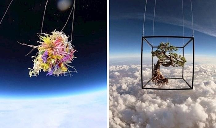 Japanski umjetnik poslao svoje biljke u svemir, rezultat je prekrasan