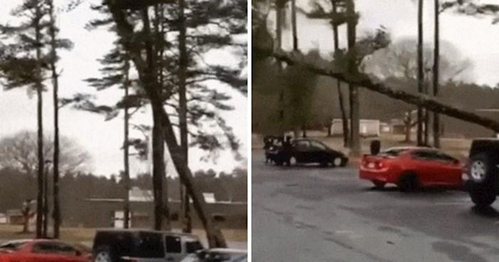 Drvo je počelo padati na parkiralištu, pogledajte što se dogodilo