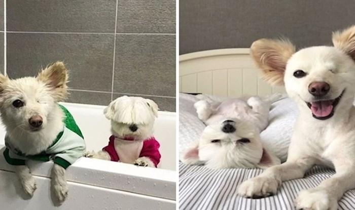 Psić bez oka i njegov najbolji prijatelj imaju jedan od najboljih profila na Instagramu