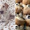 15 životinja koje su usavršile umijeće kamuflaže