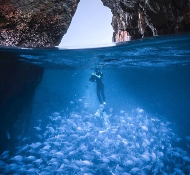 Kako toliko riba?