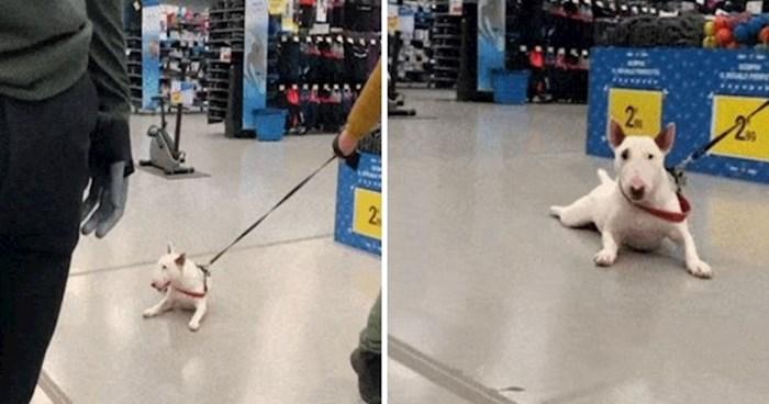 Ovaj pas se nikako ne voli šetati, pogledajte kako to izgleda kada izađe s vlasnikom