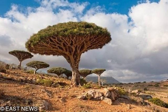 Otok Socotra