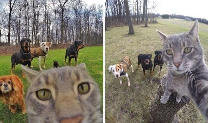 Ovo je mačak Manny koji obožava raditi selfije sa svojim prijateljima