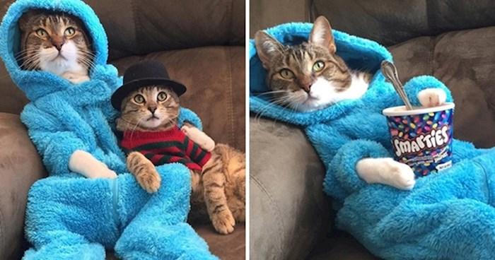 Ovo je Joey, mačak koji voli nositi plavi 'onesie' dok jede najdraže slatkiše