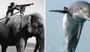 9 nevjerojatnih primjera korištenja životinja u vojsci koji će vas šokirati