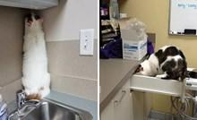 Odlična mjesta za skrivanje koje su ove mačke pronašle kako bi izbjegle veterinara