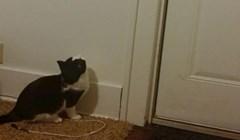 Pogledajte kako je muškarac nagovorio mačku da sama ugasi svjetlo