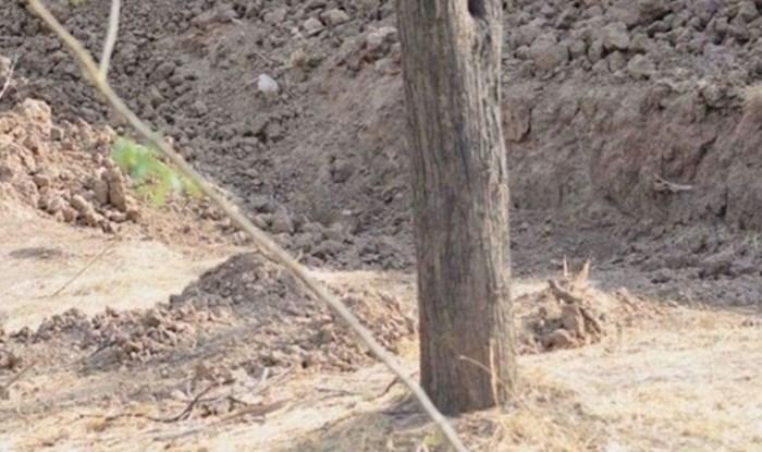 Vidite li leoparda na ovoj slici?