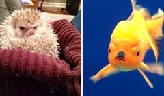12 fotografija životinja koje izgledaju kao da ih je netko naljutio