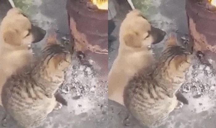 Ovi prijatelji su pronašli način da se obrane od hladnoće