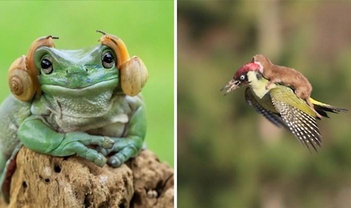 20 preslatkih fotografija životinja koje su se odlučile 'provozati' na drugima