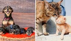 20 fotografija životinja kojima se na licu vidi koliko su ponosni na svoju mladunčad