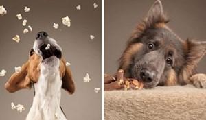 15 fotografija preslatkih psećih reakcija na hranu uljepšat će vam početak dana