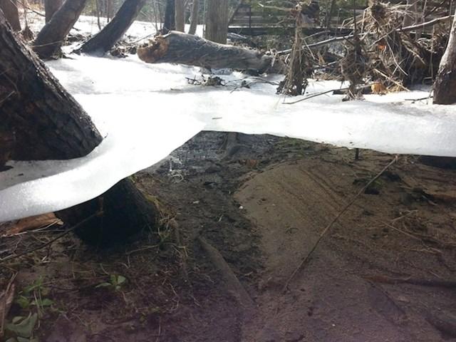 Tanki sloj leda koji je zaostao među stablima nakon što se povukla poplava.