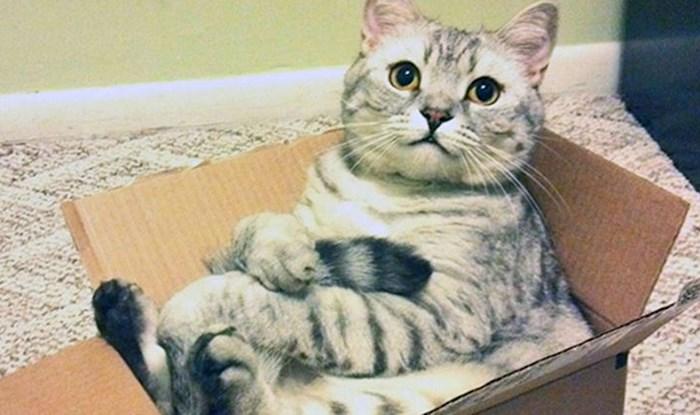 15 fotografija koje dokazuju mačju ljubav prema kartonskim kutijama