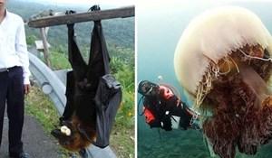 20 životinja koje su toliko velike da nećete vjerovati da su stvarne